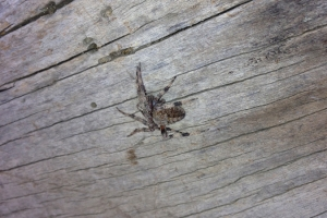 james_spider_001-fall_2013