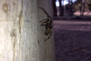 james_spider_002-fall_2013